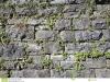 muro-secco-con-le-piante-100110079