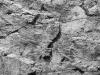 42726204-parete-di-roccia-grigio-scuro-pietra-naturale-sfondo-struttura-superficie-archivio-fotografico